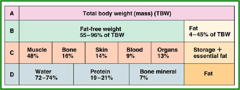 Thanks Very Body mass fat percentage